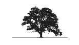 Woodbranch Management & Investments Corp-logo